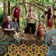 Hilight Tribe en concert au Splendid à Lille