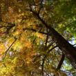 Visite Histoires d'arbres : promenade dans les jardins de Trianon
