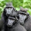 Visite PASS SAISON 2020 à MULHOUSE @ Parc Zoologique et Botanique de Mulhouse - Billets & Places