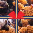 "EXCLU WEB - CADEAU ""Visite du Grand Aquarium de Saint-Malo"""