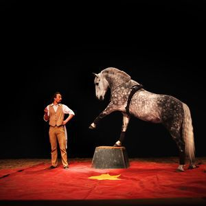"""""""CAVALCADES ESTIVALES"""" SPECTACLE (16h) + ANIMATIONS + EXPOS @ Haras national - HENNEBONT"""