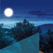Visite BALADE NATURE NOCTURNE à SAINTE MAXIME - Billets & Places