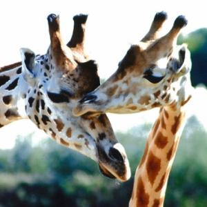 BRANFERE : PARC ANIMALIER ET BOTANIQUE + PARCABOUT @ BRANFERE - LE GUERNO