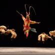 Théâtre Le beau roi singe