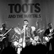 Concert TOOTS AND THE MAYTALS à RAMONVILLE @ LE BIKINI - Billets & Places