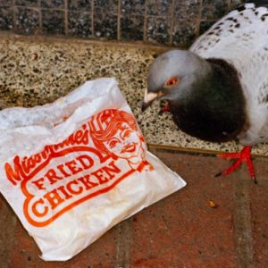 MY DEAD BIRD / SONGS @ Le Jardin de Verre - CHOLET