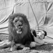 """Expo Programme """"Le cirque en folie"""" (54min)"""