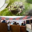[D20] A table les grenouilles/Exposé en mathématiques