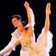 Spectacle GALA D'ETOILES - SAISON 11 à LILLE @ Théâtre du Casino Barrière - Billets & Places