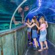 Pack Tribu 2021 - Grand Aquarium de Touraine