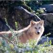 Visite BILLET BASSE SAISON 2020 à MULHOUSE @ Parc Zoologique et Botanique de Mulhouse - Billets & Places