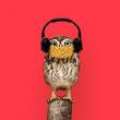 Visite Les Silencieuses - Nocturnes en musique