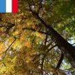 Visite Histoires d'arbres - Promenade dans les jardins de Trianon