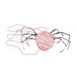 L'éloge des araignées - Rodéo Théâtre