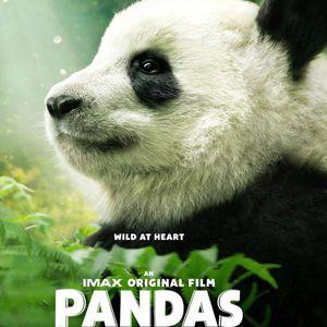 PANDAS @ La Géode - Paris
