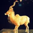 """Théâtre """"Promenons-nous dans les boîtes"""" à BIARRITZ @ Les Découvertes - Théâtre des Chimères - Billets & Places"""