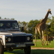 Safari VIP
