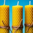 Découverte de la vie des abeilles