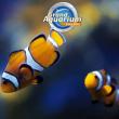 """BILLET """"OPEN 2020"""" à Saint-Malo @ Grand Aquarium de Saint-Malo - Billets & Places"""