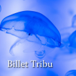"EXCLU WEB - BILLET ""TRIBU 2018"""